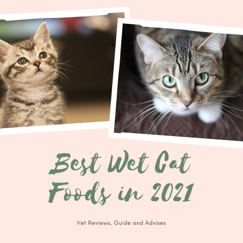Best Wet Cat Foods 2021 (Vet Recommended, Buying Guide and Reviews with Pros & Cons) 🐱🍲